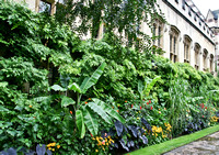 Oxford - Balliol College - Gardens